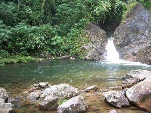 Putumayo has great fauna and flora diversity.